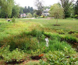 Floodplain Restoration