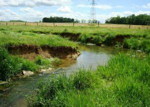 landis-homes-retirement-community-swm-floodplain-restoration-before-restoration