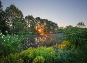 warwick-twp-lititz-borough-ms4-lititz-run-riparian-park-wetland
