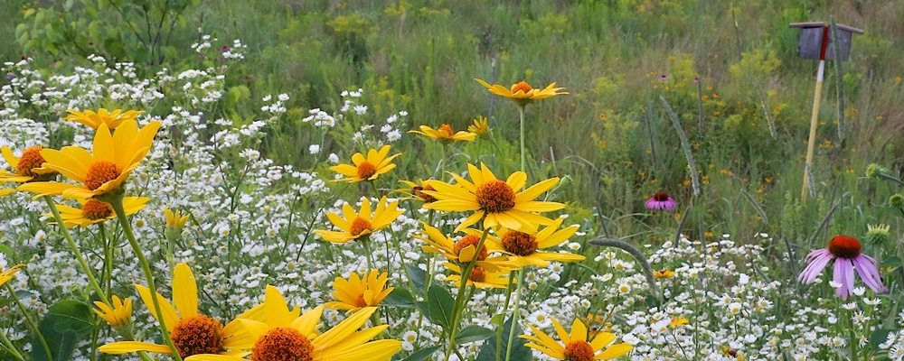 Native Plants Are a Valuable Addition to Your Landscape