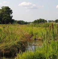 Big Spring Run Wetland